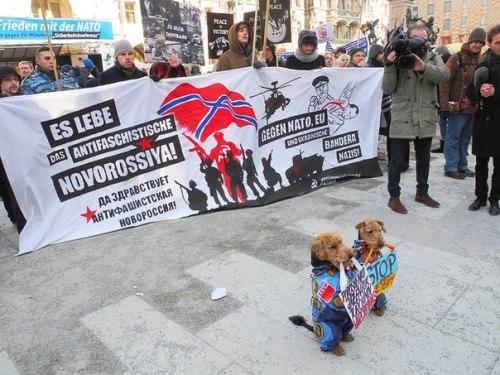 Novorossiya-Dogs